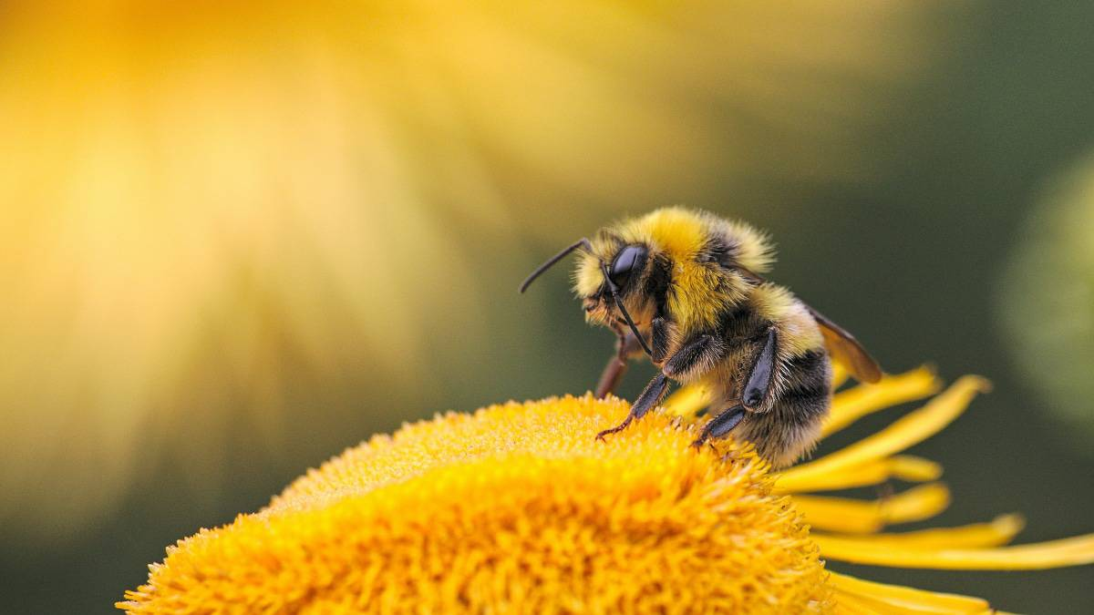 Beeflow réaliser une levée de fonds pour sauver les abeilles.