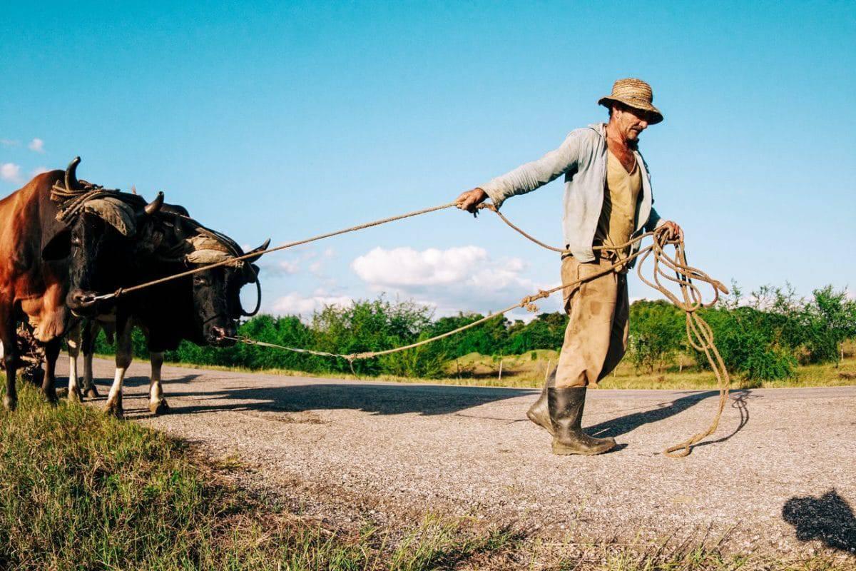 Tazah, la nouvelle start-up agro-technologique